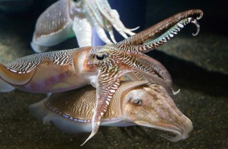 CALAMARPEDIA » Calamares. Enciclopedia Ilustrada